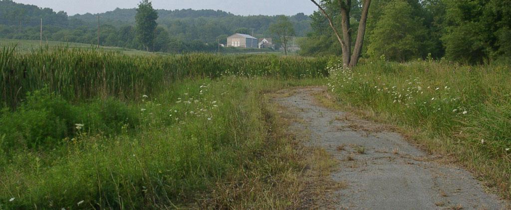 Wetlands walking trail