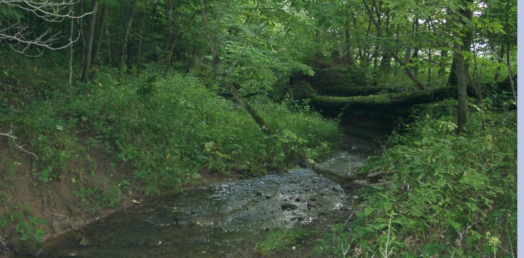 Steele's Run along wetlands trail