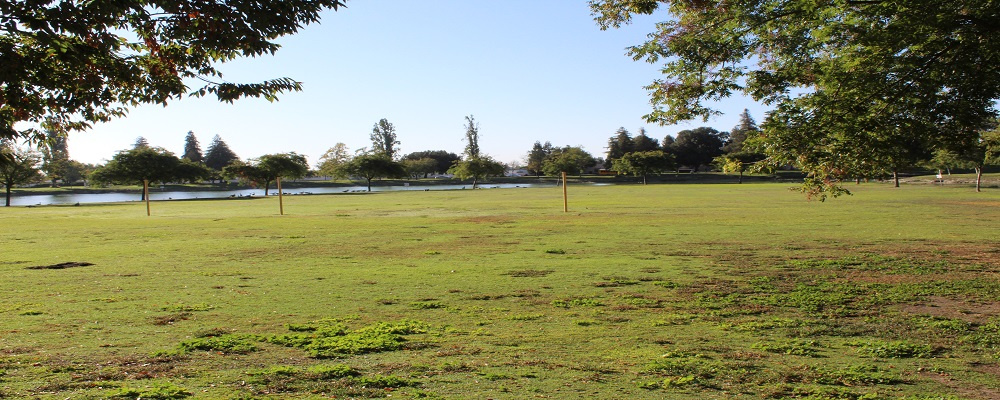 Donnelly Park Meadow Area